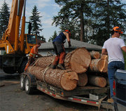 Tree Services in Kelowna BC