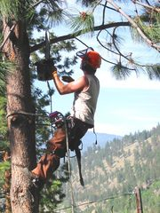 Tree Pruning and Shrubing Services